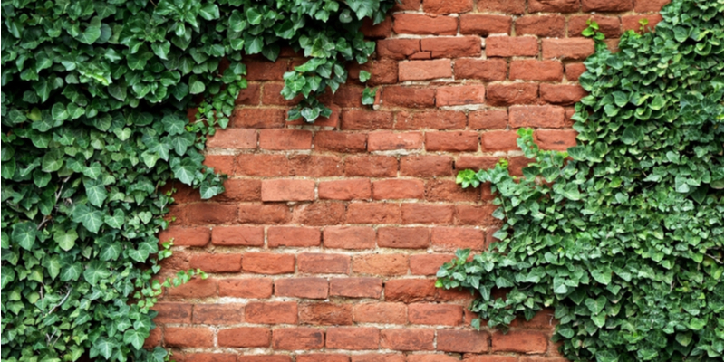 Is it Okay for Old Brick to be Covered in Ivy?