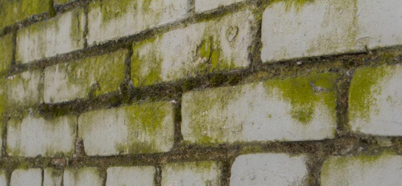 Removing Mold from Bricks